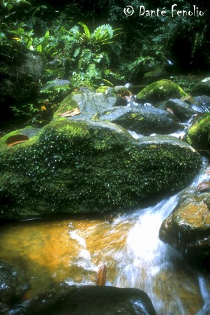 Streams running through our research area were strewn with moss covered boulders.
