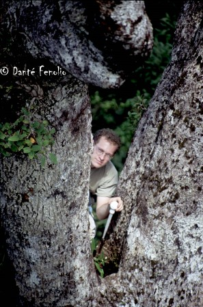 Mark Walvoord collects water samples from a tree hole in an emergent tree.