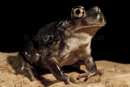 A strange amphibian to run into deep within a Tennessee cave.....